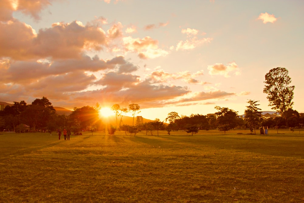 people walking on grass field during golden hour