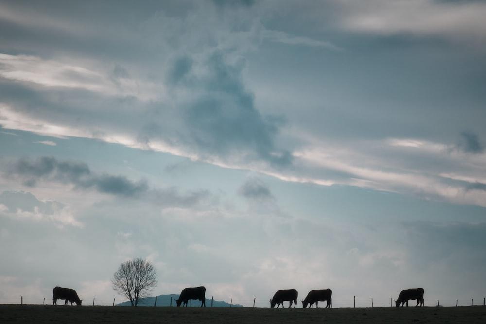 silhouette of animals walking towards bare tree