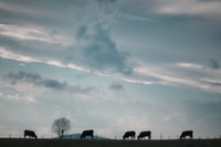 silhouette of animals walking towards bare tree