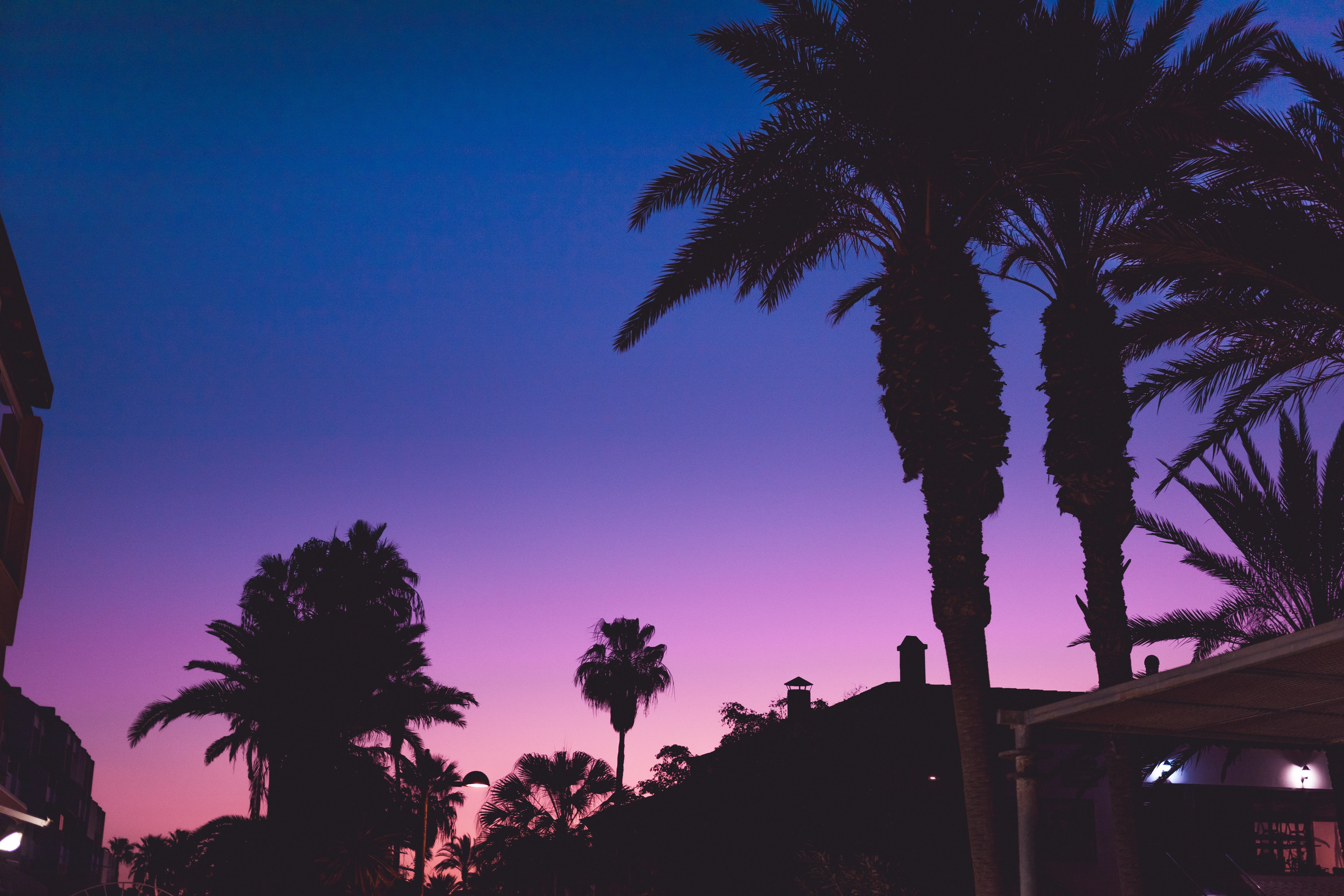 palm trees at night-time