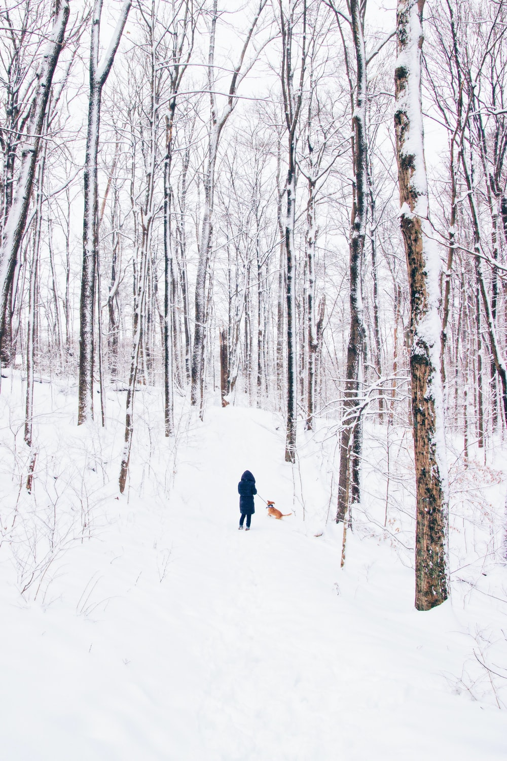 person standing on snow field beside dog surrounded by trees