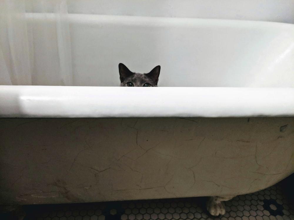 gray cat on bath tub