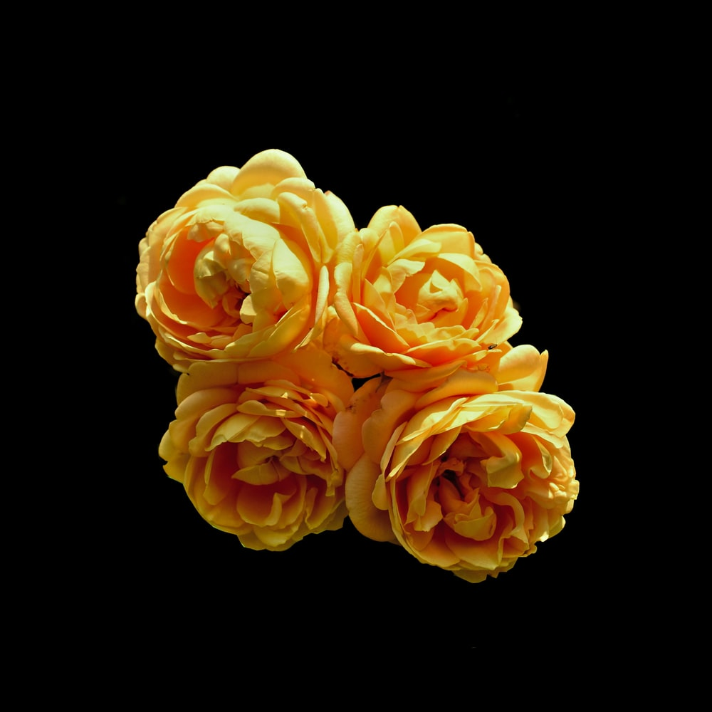 four yellow roses