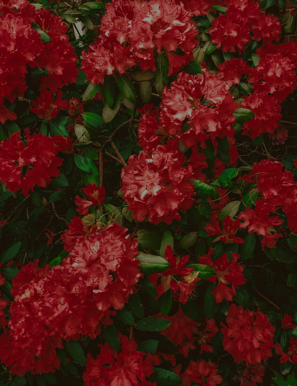 red flowering plant outdoors