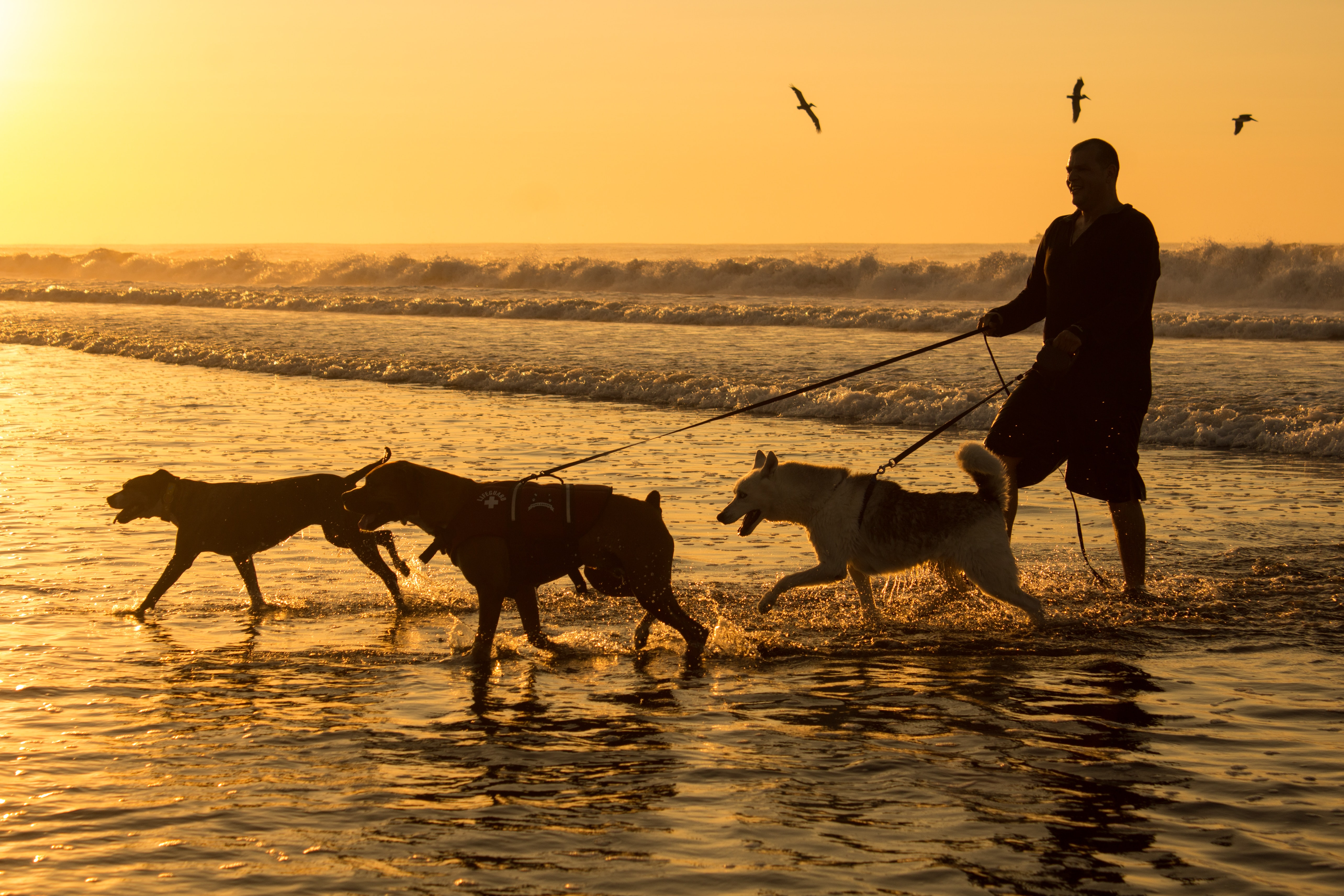 silhouette photography of man holding three dog leashes on body of water