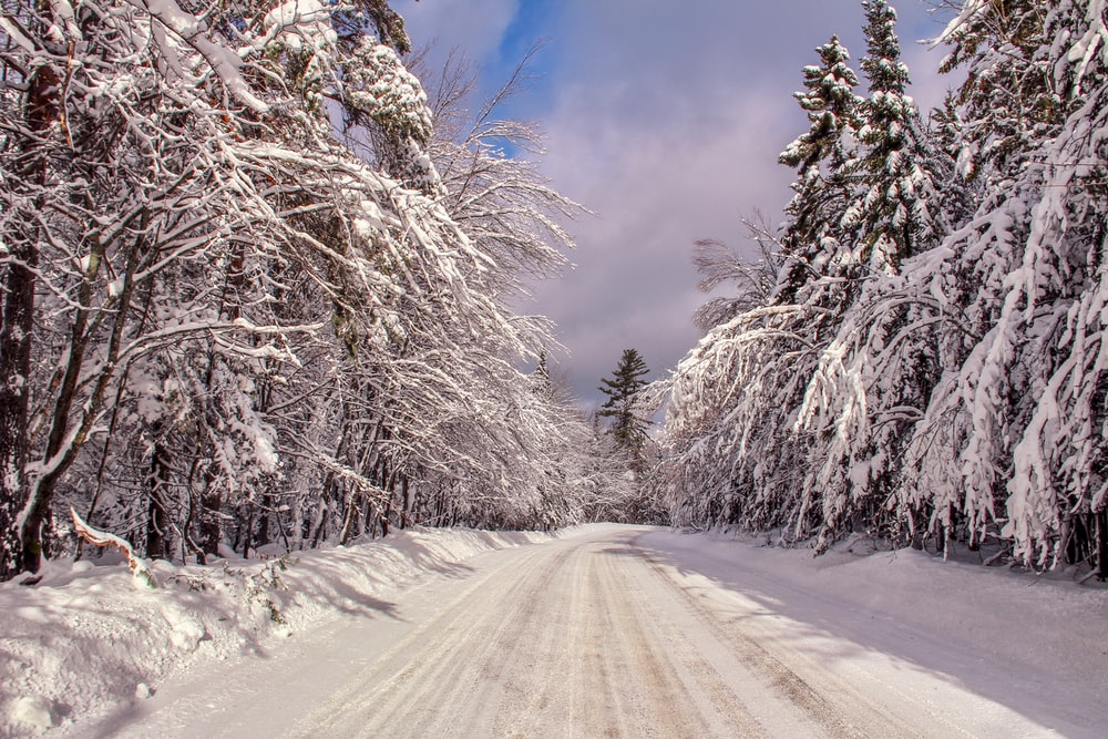 road covered with snow between trees during daytime