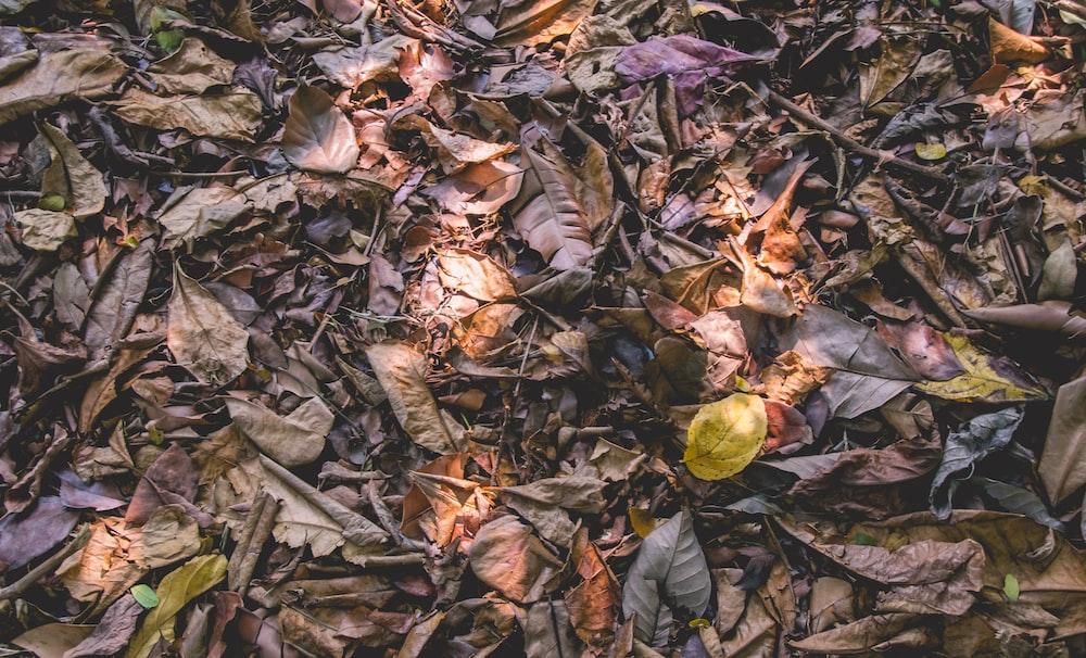 brown dried leaves display