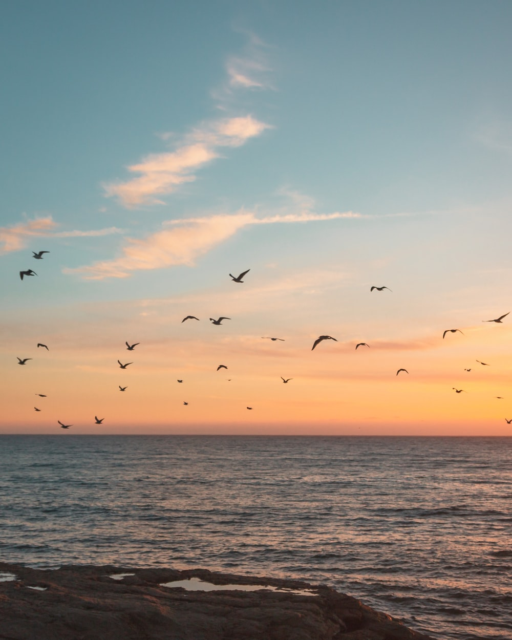 flock of birds flying over the sea