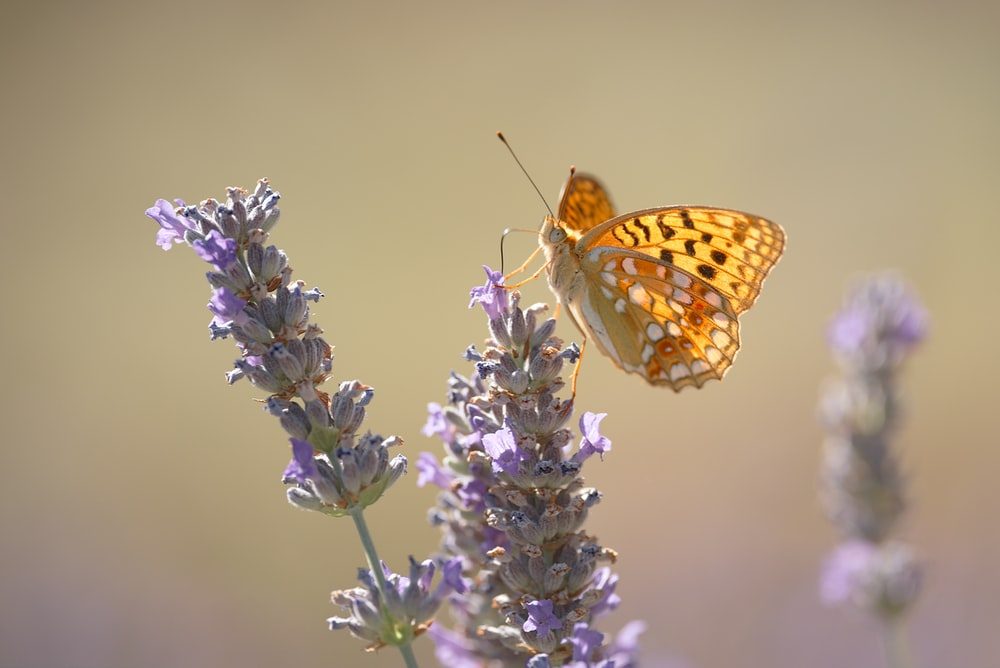 yellow butterfly perching on flower