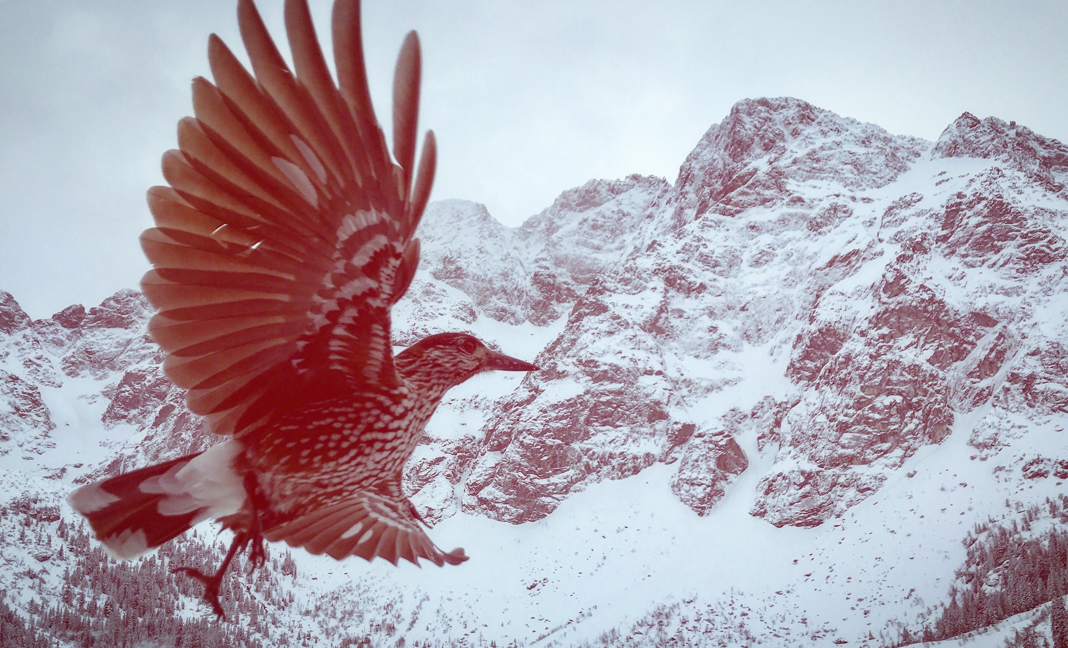 bird flying over the mountain