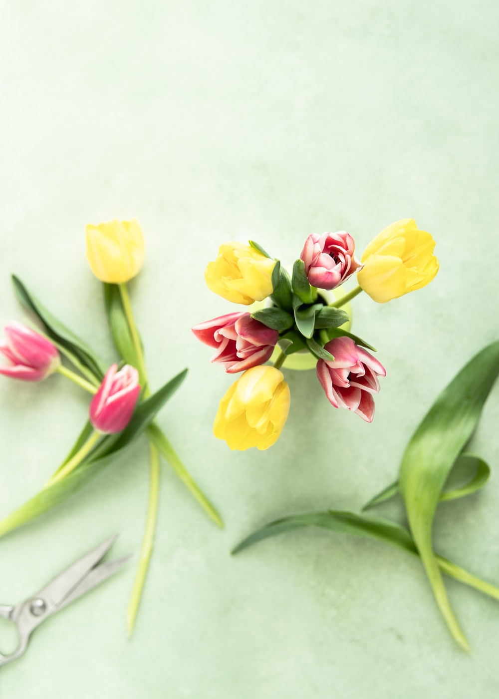 yellow and pink tulip flowers