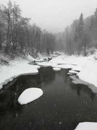 river covered with snow beside trees during daytime
