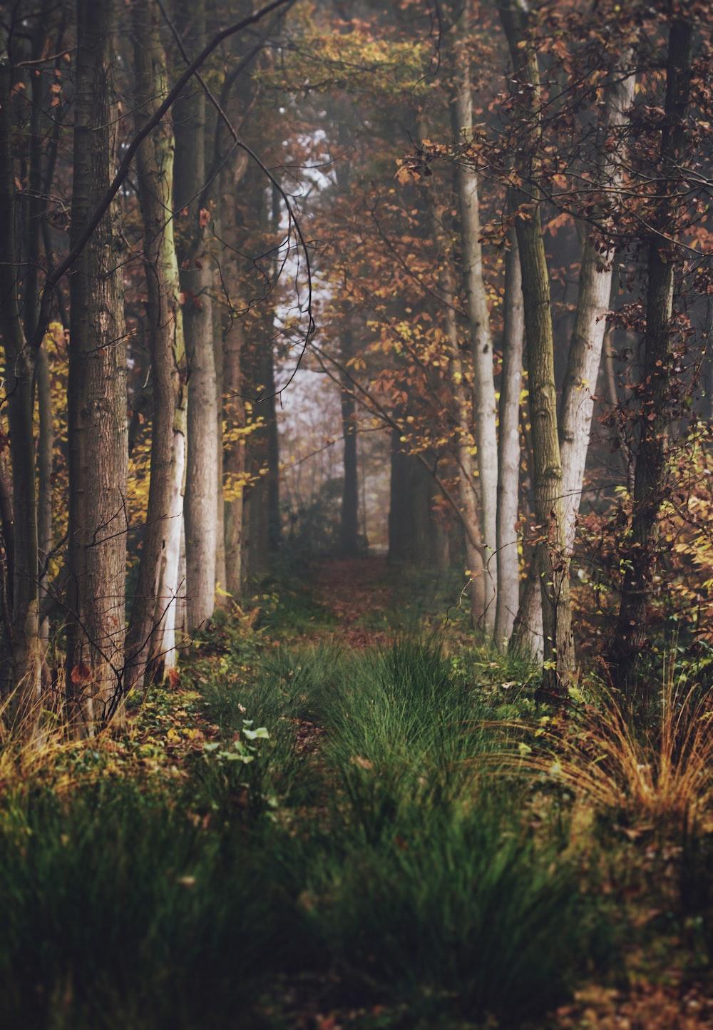 pathway between brown trees during daytime