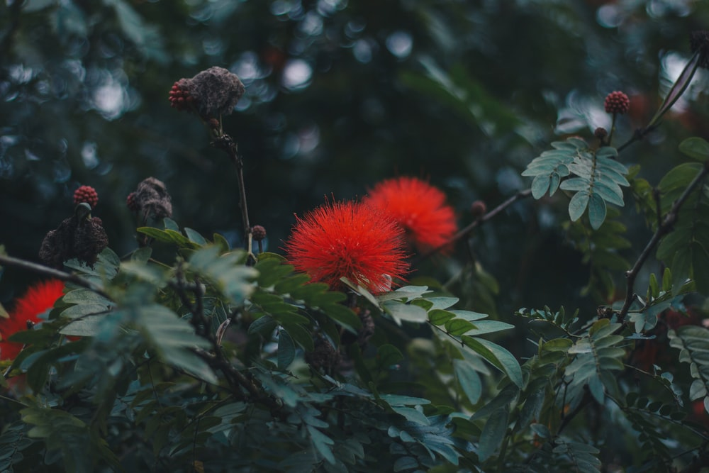shallow focus photo of red flowers