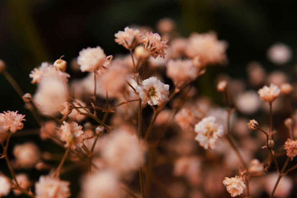 tilt shift focus photography of white flower