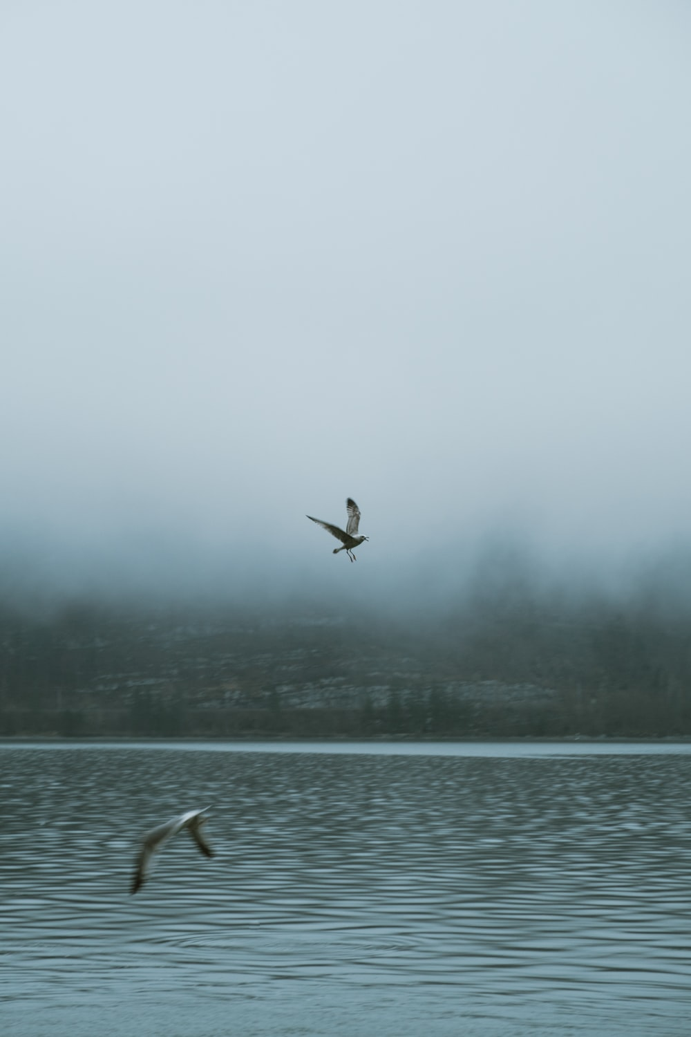 two birds flying on mid air above body of water during daytime