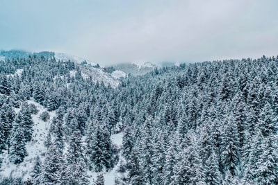 gray pine trees covered with snow during daytime idaho zoom background
