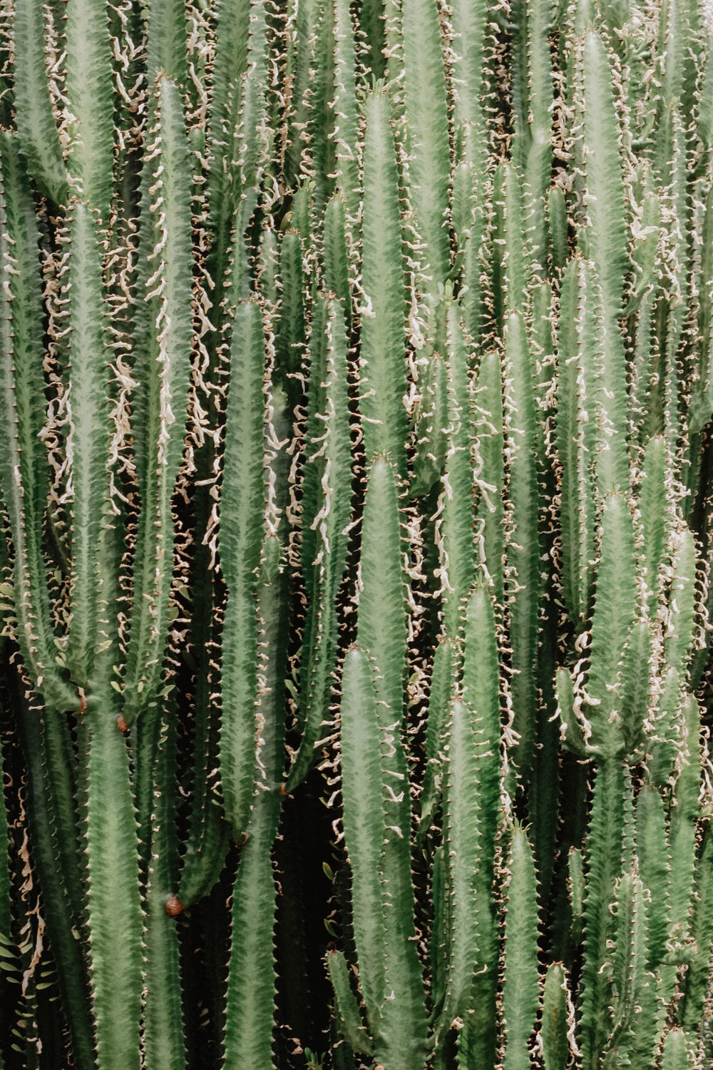 green cactus plant close-up photo