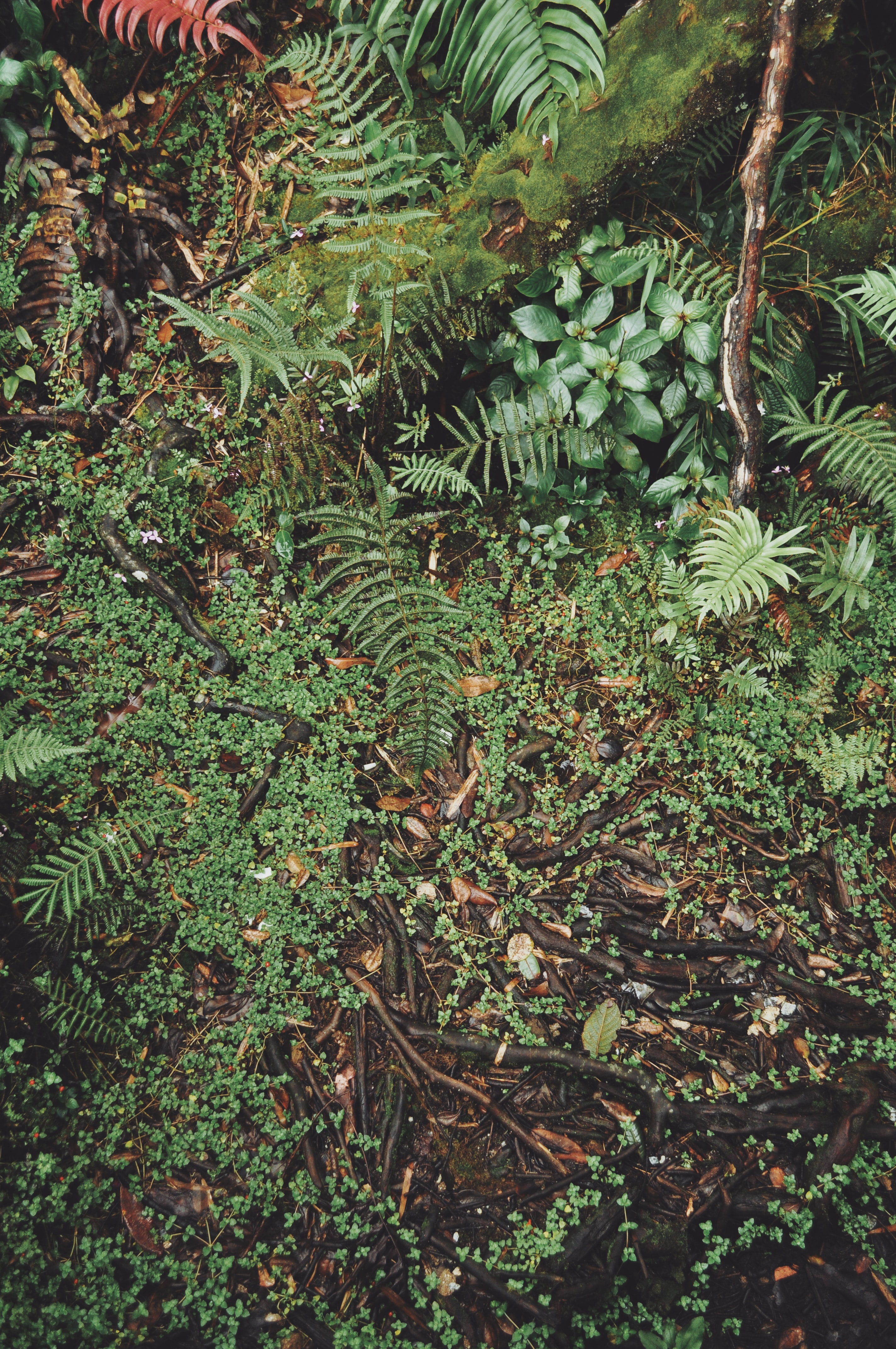 aerial view photography of fern plants