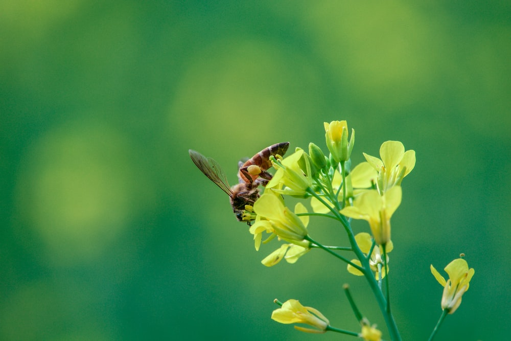 wasp on yellow petaled flower