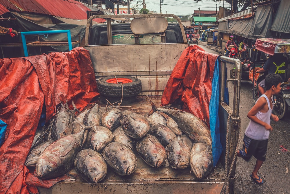 big fishes on gray truck