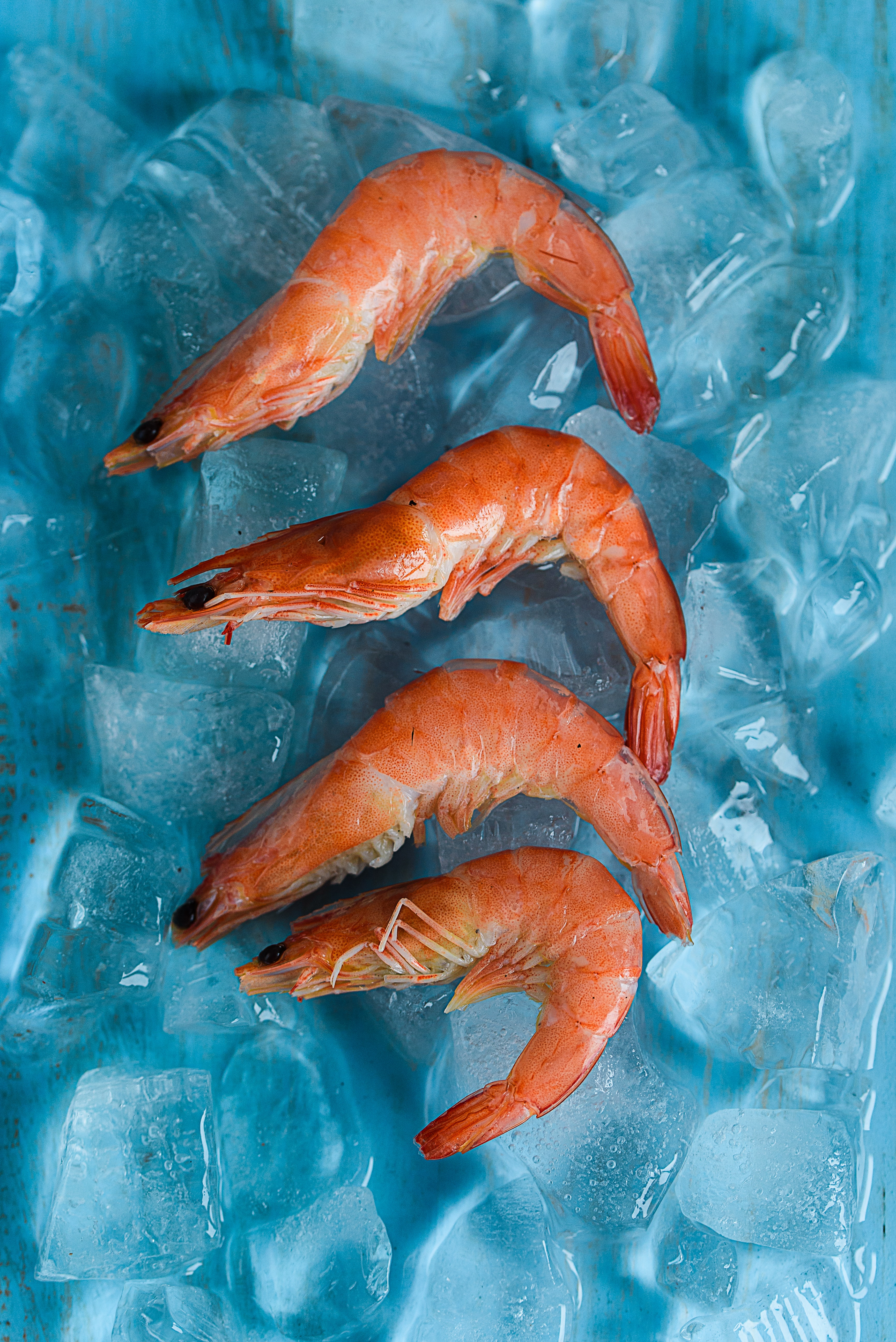 four shrimps on top of ice