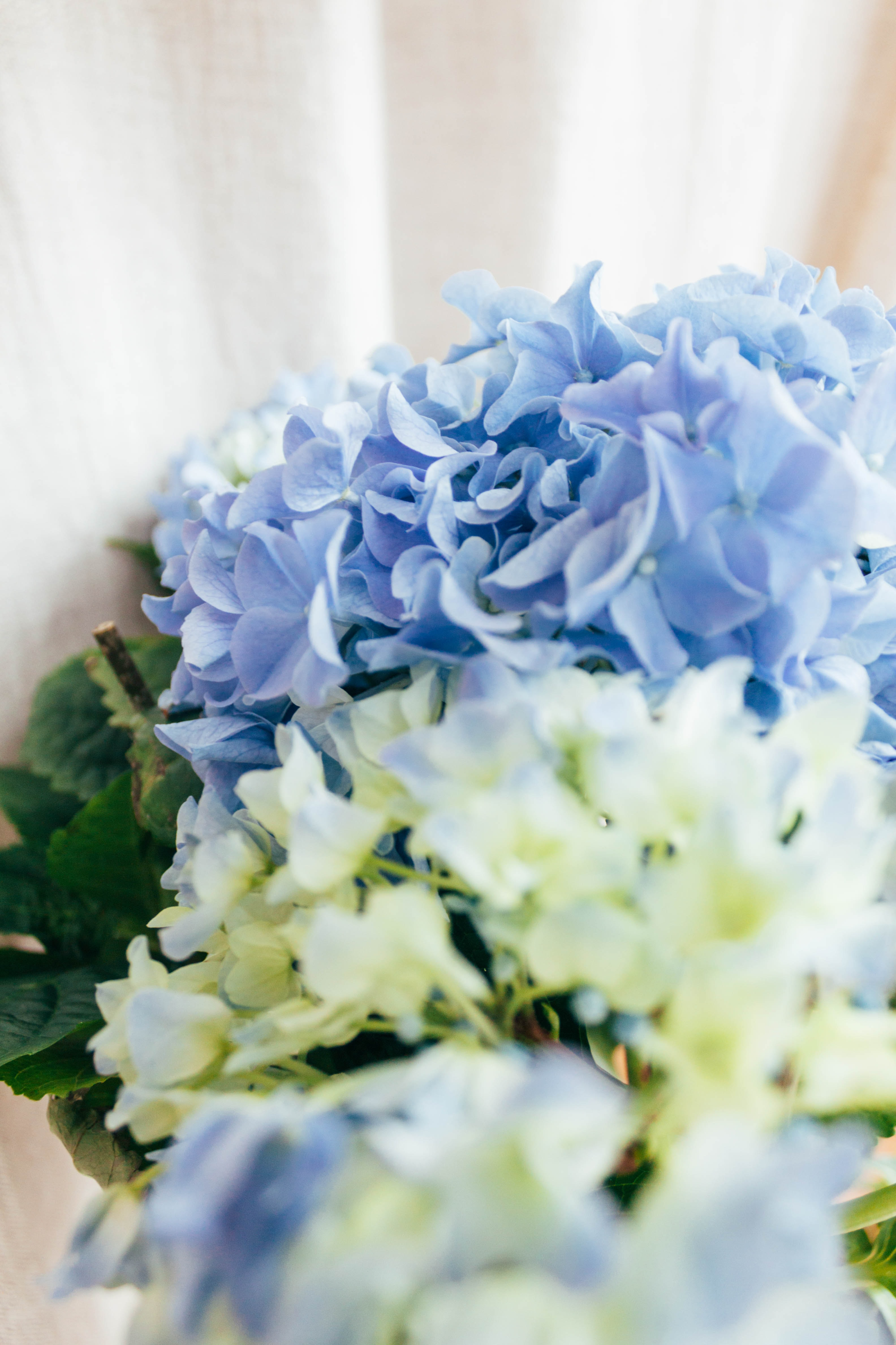 close-up photography of blue and yellow petaled flowers