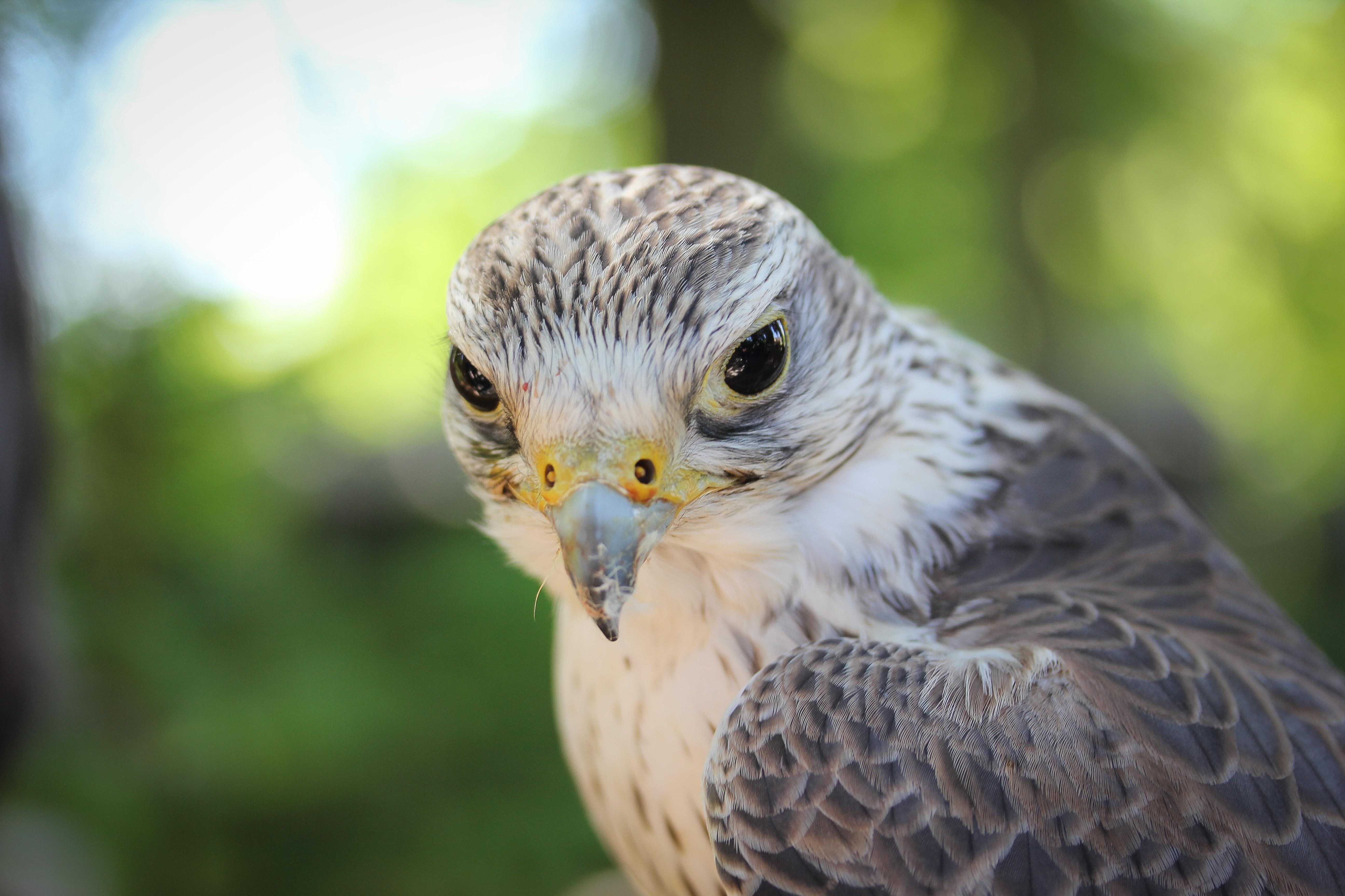 selective focus photography of gray short-beaked bird