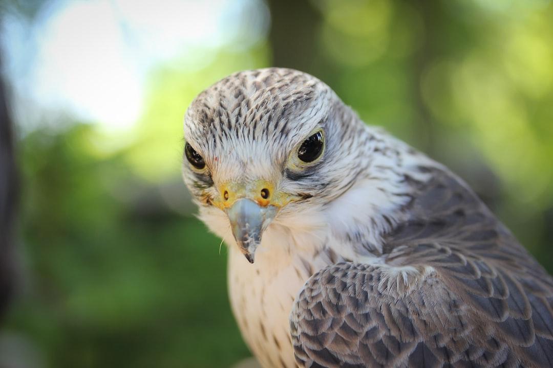 Mon API Rest en Python avec Falcon (1/2)
