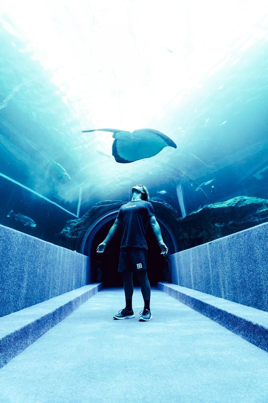 man standing on underwater dome under stingray