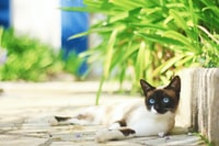 brown and white cat beside linear plant