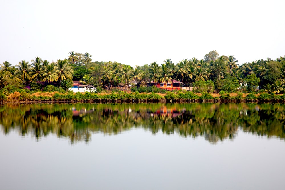 houses surrounded with coconut trees near body of water during daytime