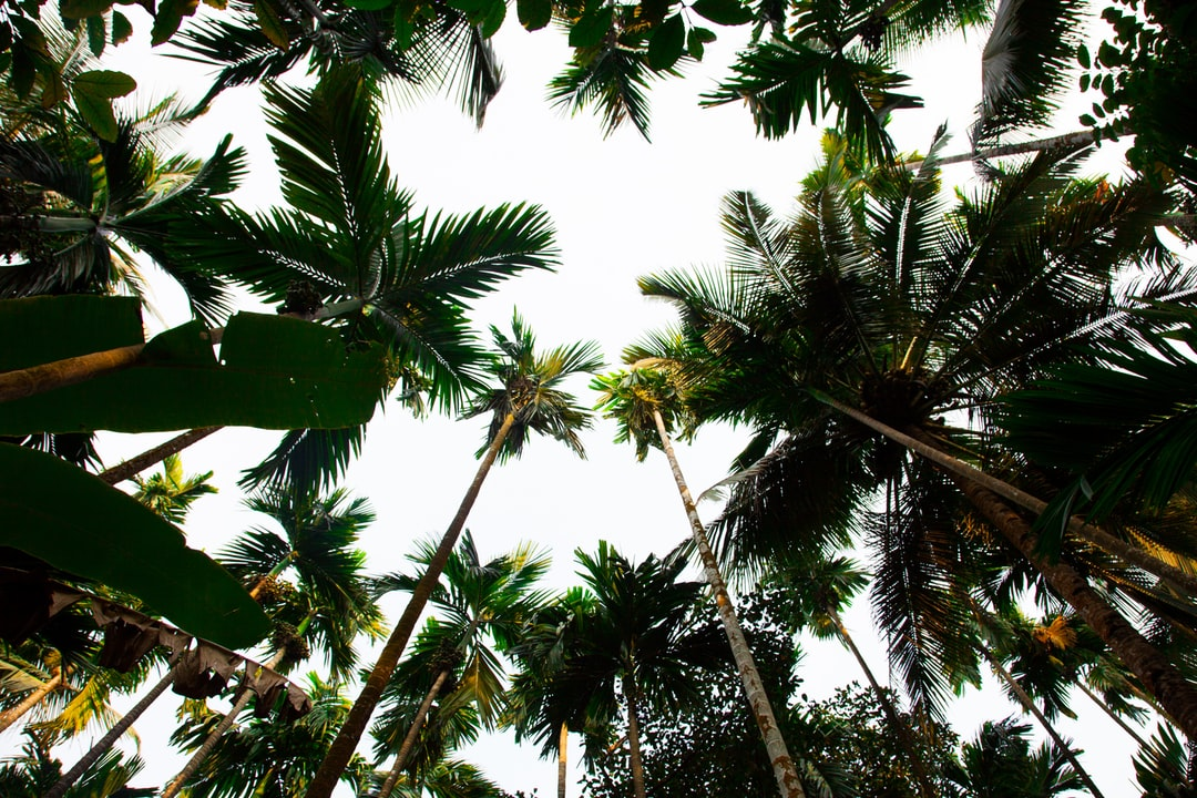 Palm Tree, Plant, Vegetation And Outdoors