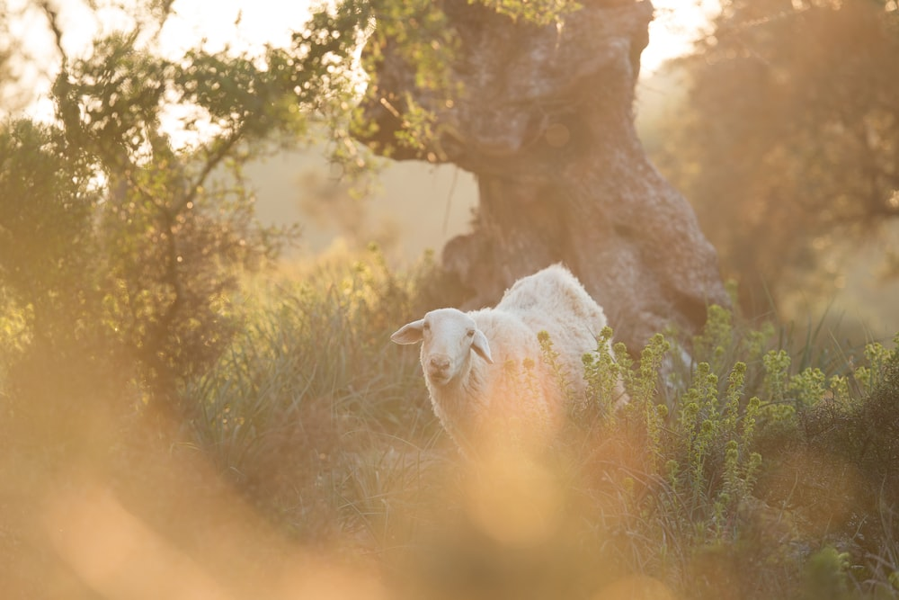 selective focus photography of white sheep beside tree