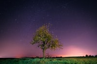 tree and grasses under starry sky