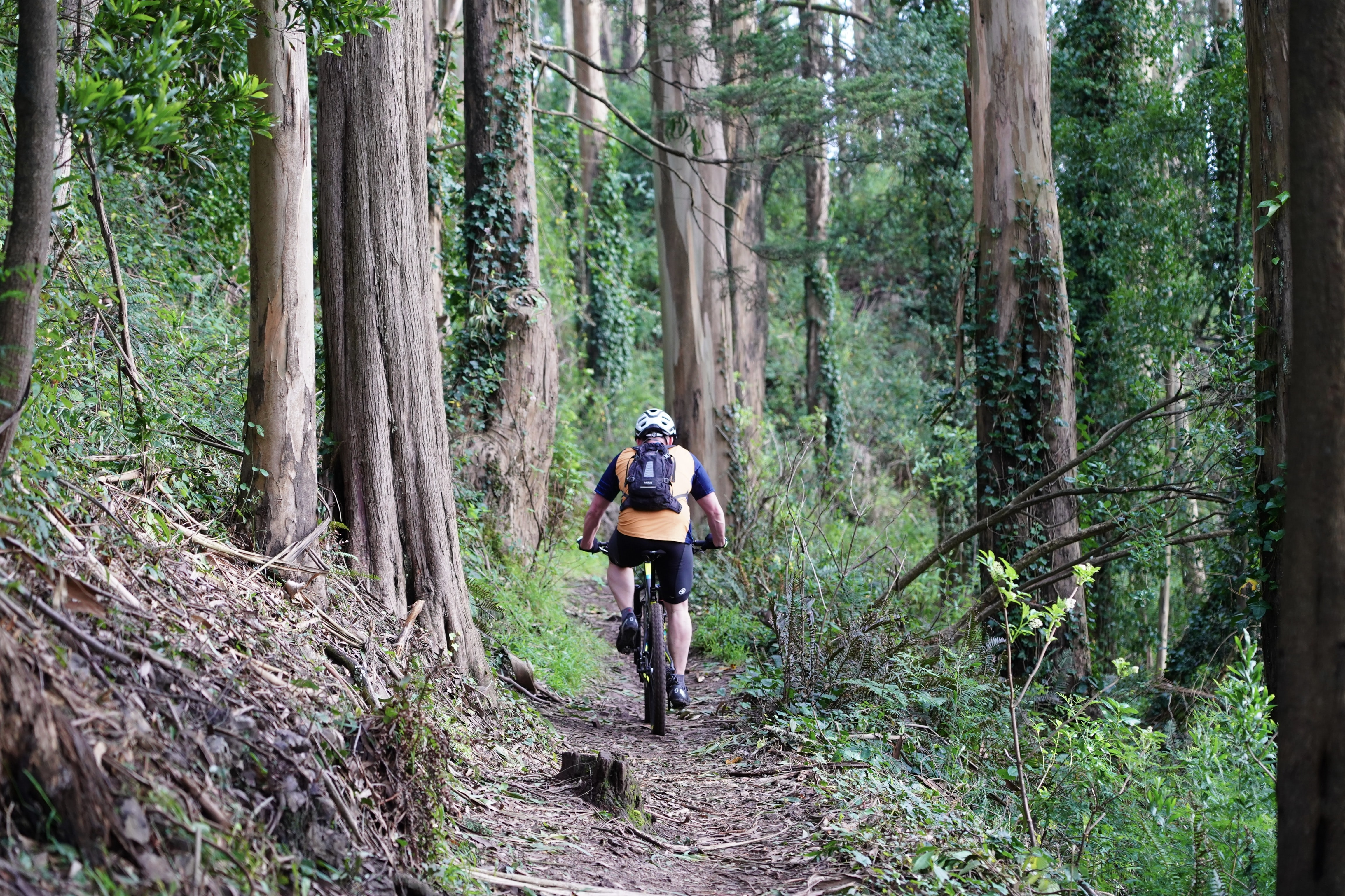 person cycling on jungle during daytime