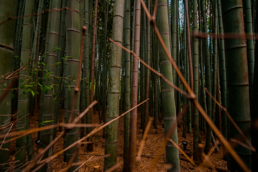 brown twigs in front of bamboo plants