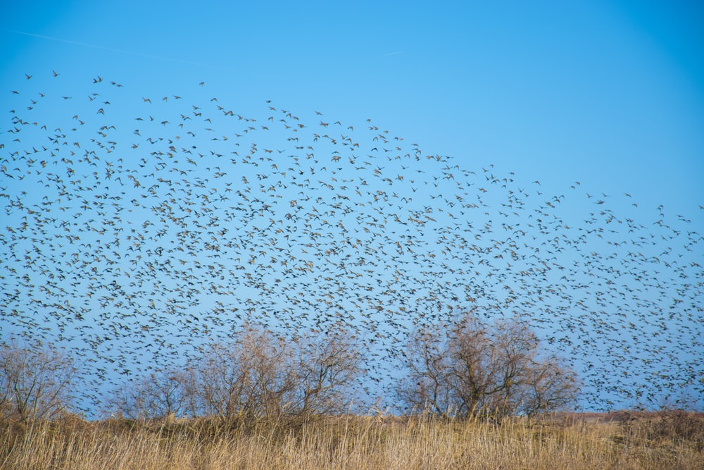 flock of birds flying to the sky during daytime