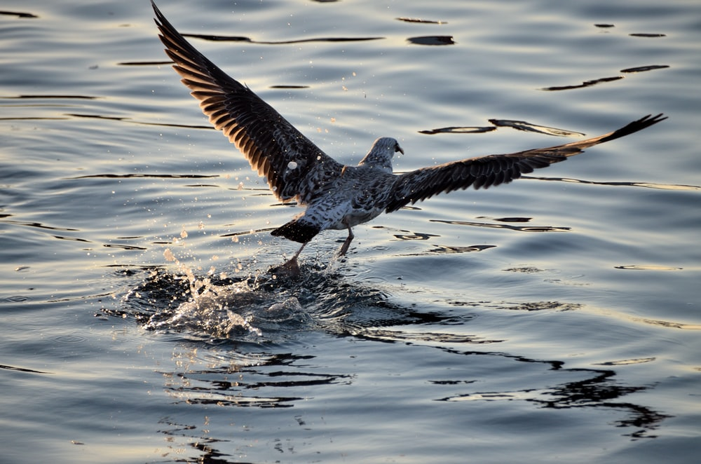 selective focus photography of bird above water during daytime