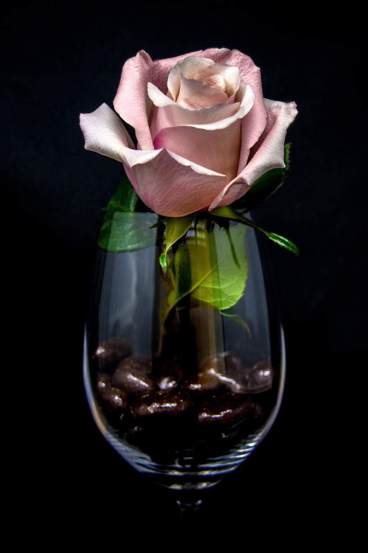 pink rose flower inside wine glass
