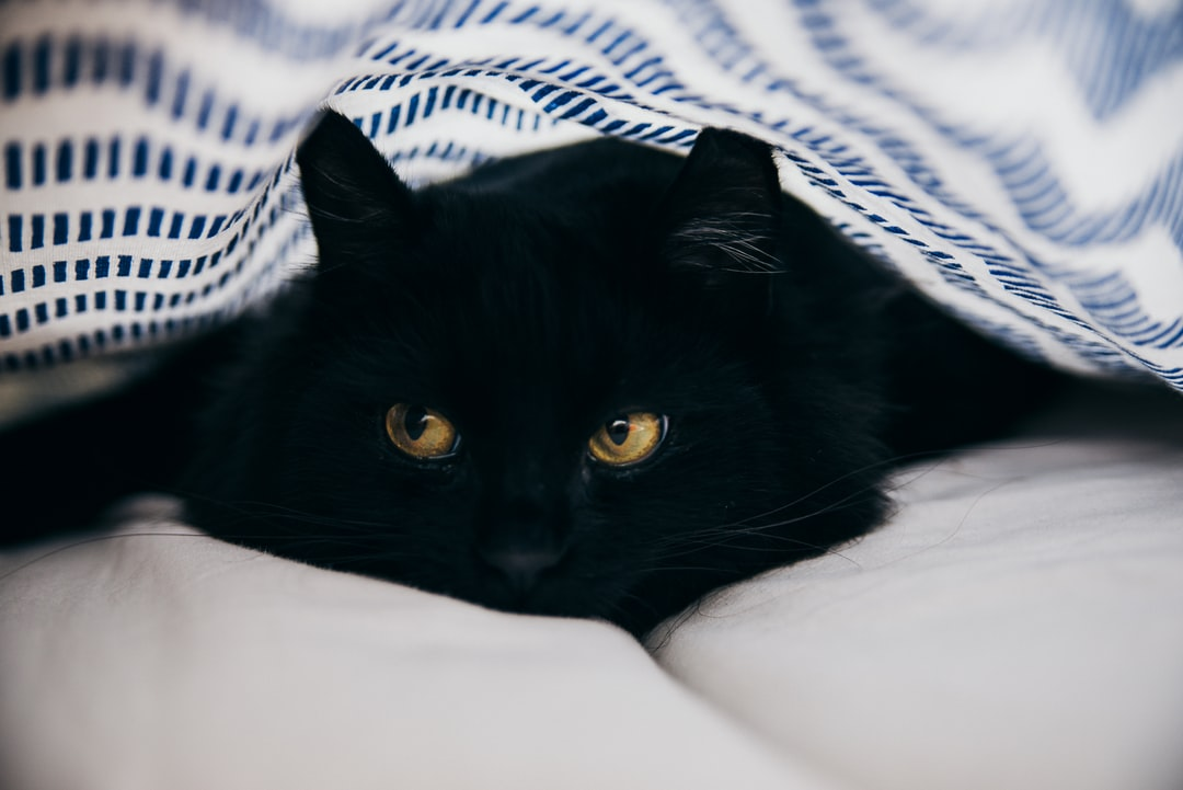 The cutest black cat to wake up to on a Sunday morning.