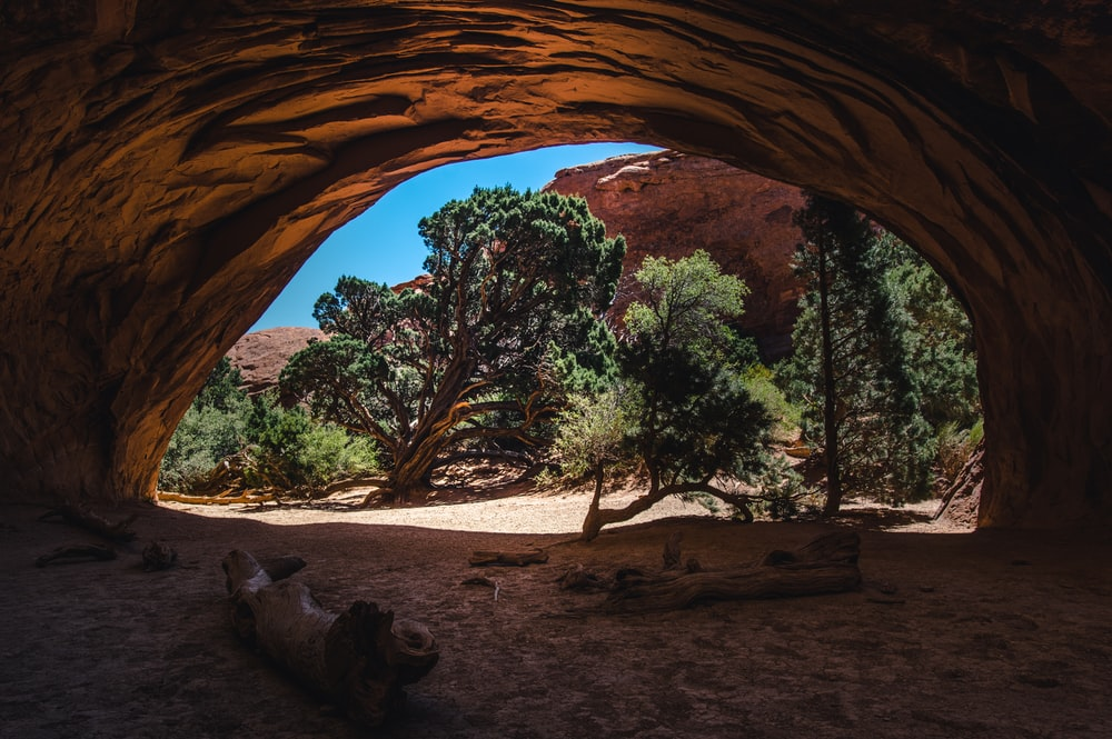 tree lugs inside cave during daytime
