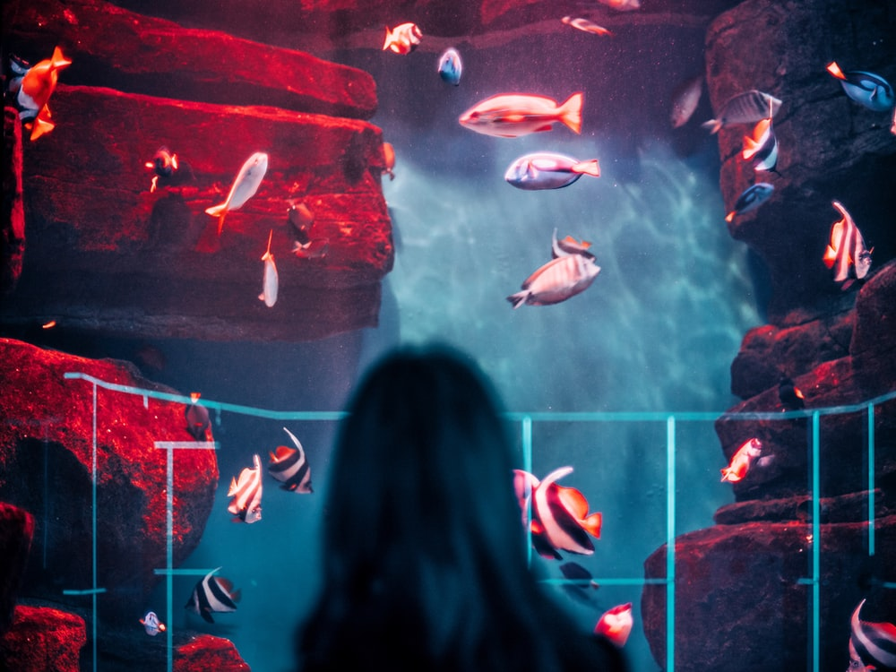 woman standing in front of aquarium