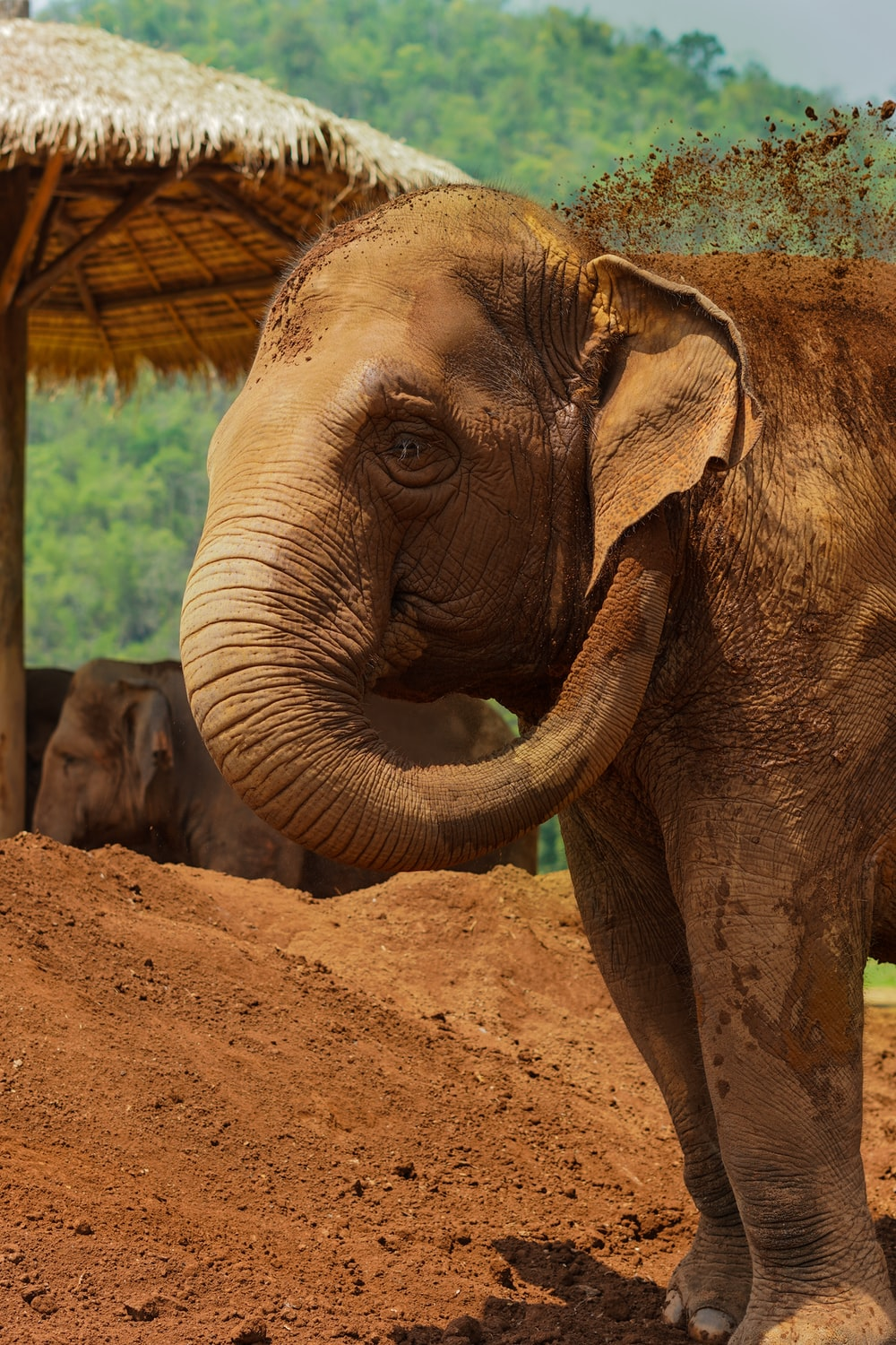 brown elephant playing with dirt during daytime