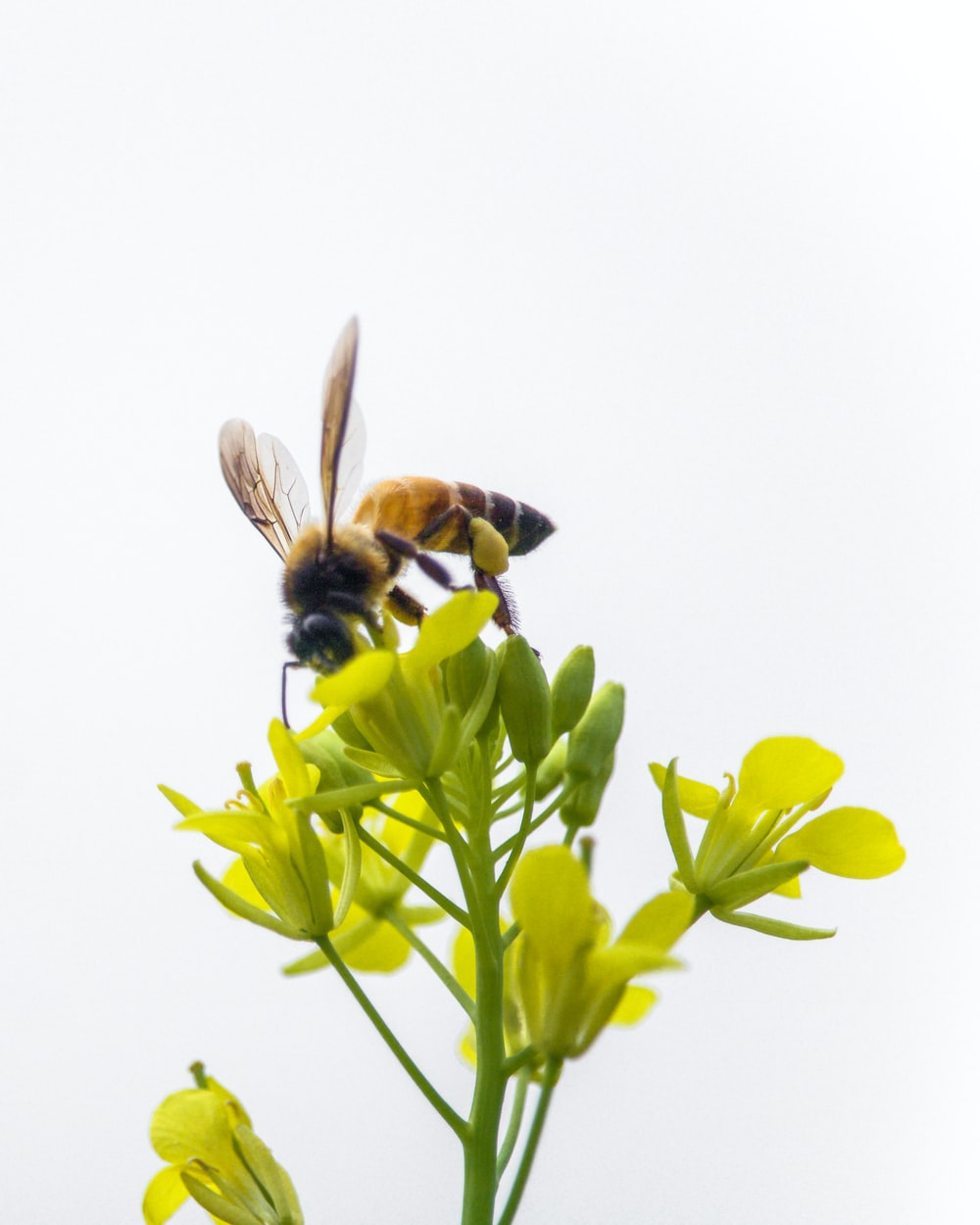 bee perched on yellow-petaled flower