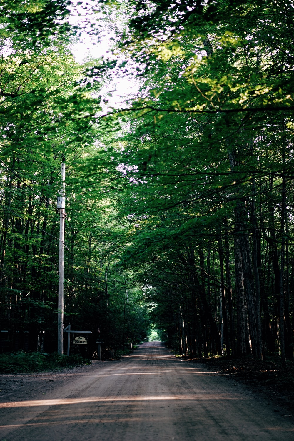 dirt road between tall trees during daytime