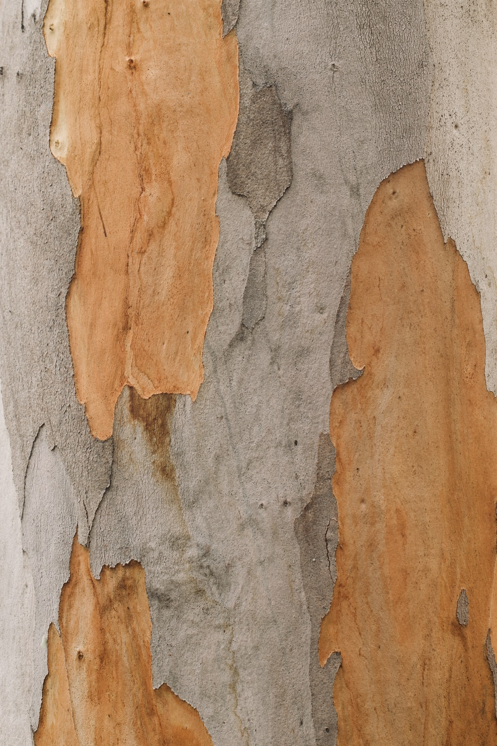 close up photo of tree trunk