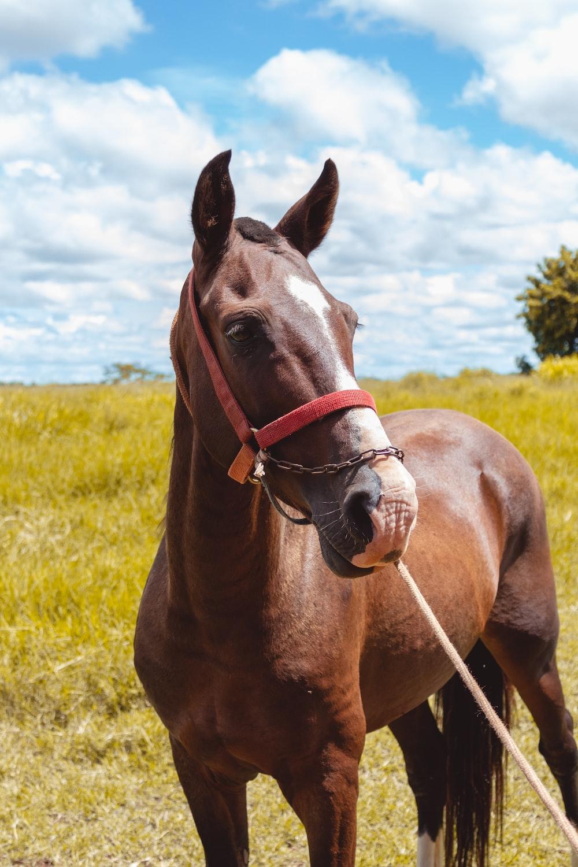 brown horse under white sky