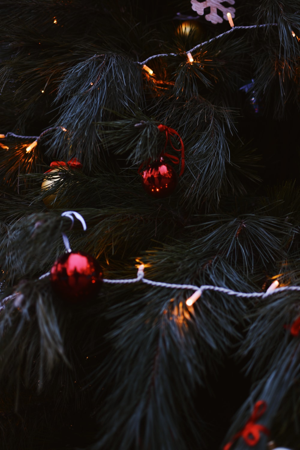 Green Christmas Tree With White String Lights Photo Free