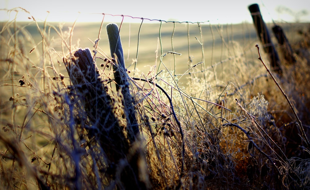 brown dried plant with fence